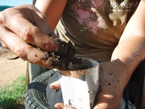 9. Grab your paper cups and soil and get comfy! Fill your paper cups with soil to the top edge. We use a 50% compost & 50% worm compost mix. I definitely recommend some sort of rich soil, NOT manure!